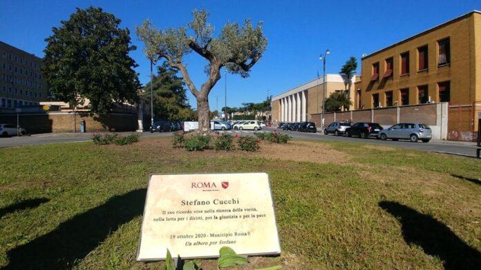 UN ULIVO DAVANTI ALLA SAPIENZA: un omaggio a Stefano Cucchi